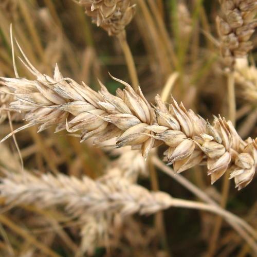 (foto: Siim Sindonen, 8stream.com / sxc.hu )