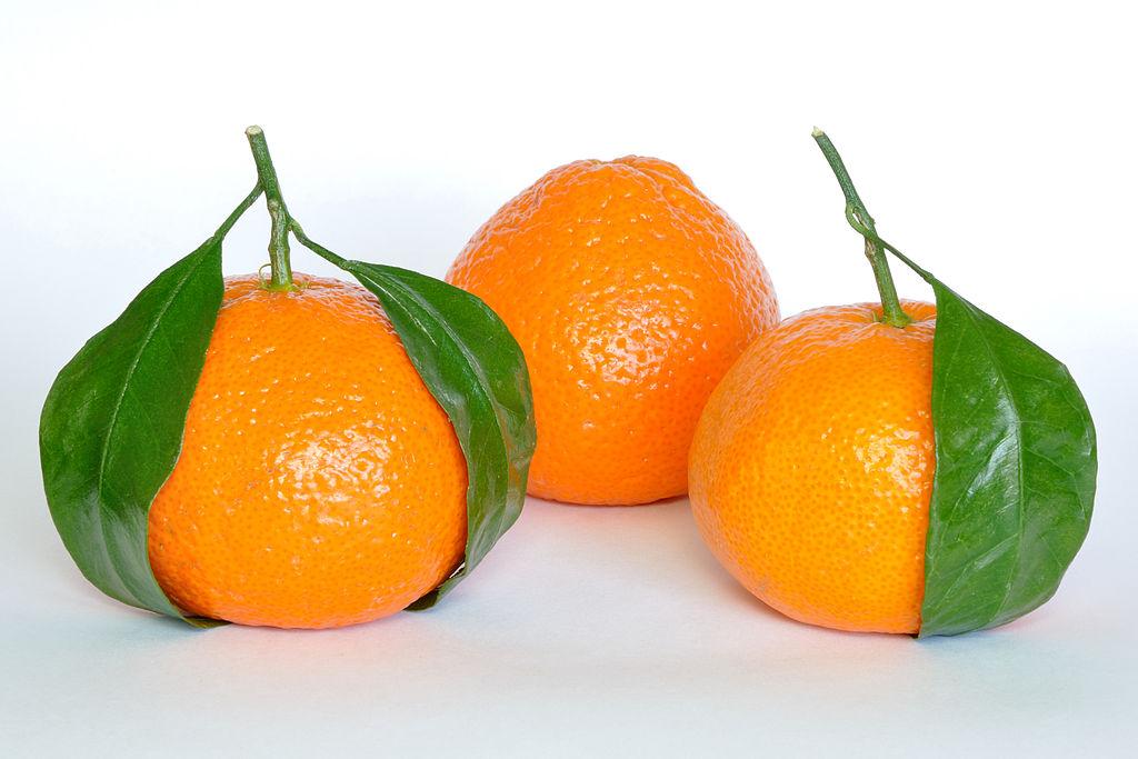 Citrus Reticulata Mandarynka - (fot. CC BY-SA 3.0, autor: Joe Ravi )