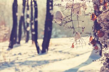 Jesienno zimowa pielęgnacja skóry z kosmetykami naturalnymi WISE